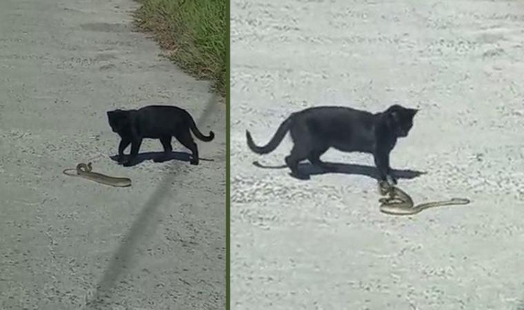 Kedi ile yılanın kavgası kamerada