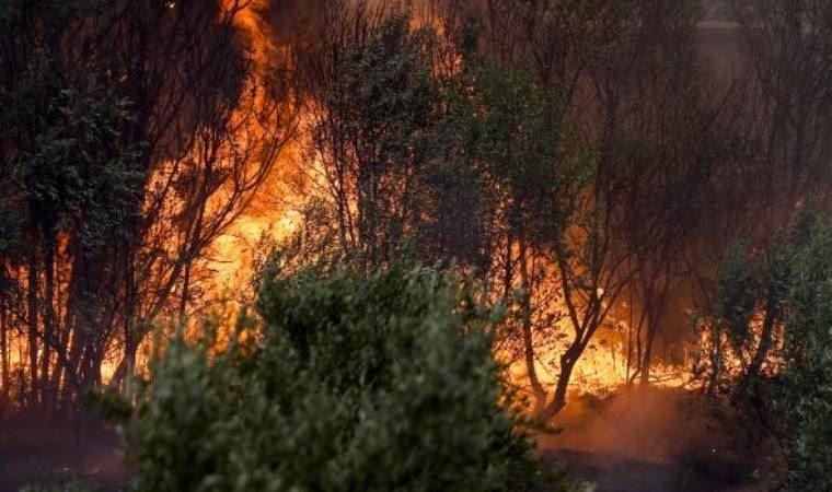 Manavgat'taki orman yangınlarına ilişkin ilk tutuklama
