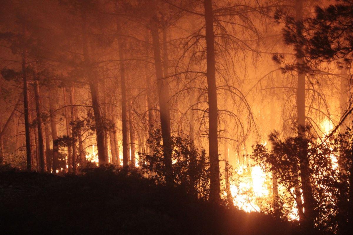 <p><strong>8 CAN KAYBI</strong></p><p>Yangınlar nedeniyle can kaybı 8'e yükseldi. Sağlık Bakanı Fahrettin Koca, Muğla'da bir kişinin hayatını kaybettiğini duyurdu. Antalya'da 7 kişi hayatını kaybetmişti.</p><p>Koca'nın açıklamasına göre Muğla'da tedavisi tamamlanan 271 kişi, Antalya'da 598 kişi taburcu edildi. Antalya'da 11, Muğla'da ise 36 kişinin tedavisine devam ediliyor.</p>