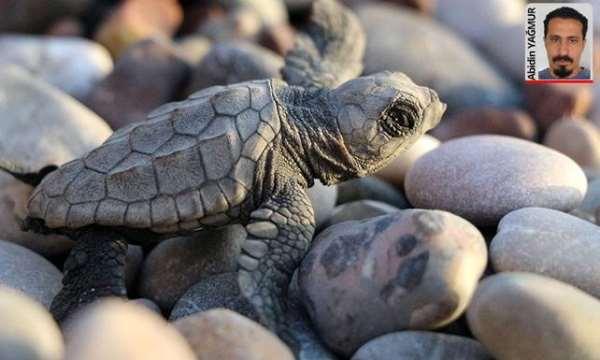 Kaplumbağa sınavı